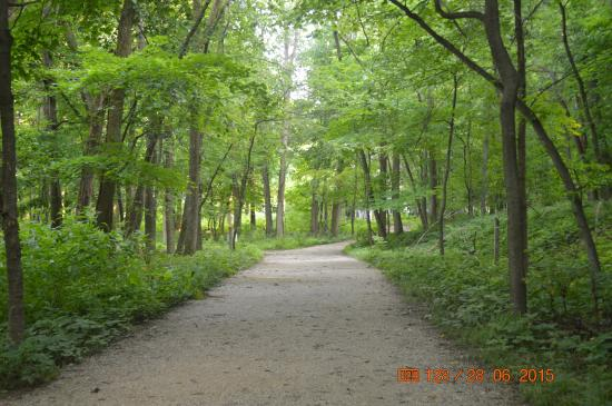 Forest Park: The Trail