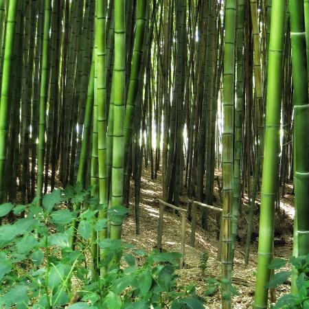 Deerwoode Lodge & Cabins: Ahhhh!  The Bamboo Forest