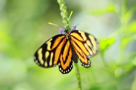 pretty picture of niagara parks butterfly conservatory. Black Bedroom Furniture Sets. Home Design Ideas