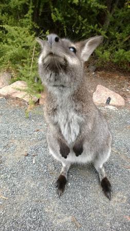 Tasmania, Australia: En la ruta nos saludaba!