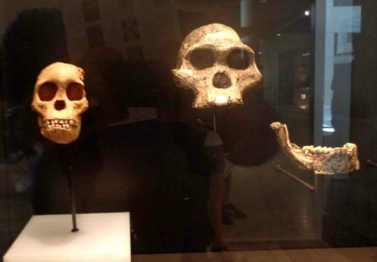 Museo de Arqueología: Pre-historic skulls and jawbone