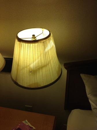 Quality Inn Tech Center: Lamp shade