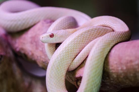 Imazu White Snakes Museum