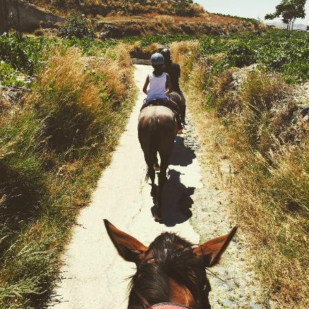 Santorini Horse Riding (Megalochori, Greece): Top Tips ...