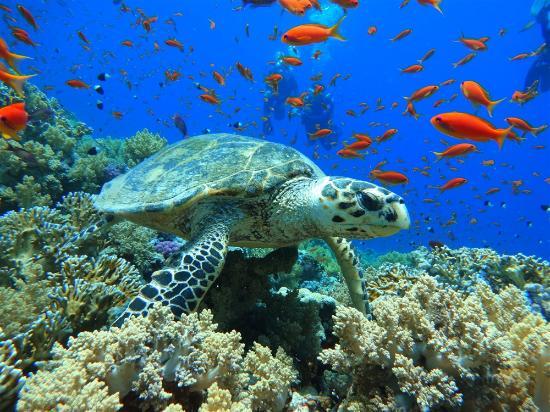 Blue Hole: морская черепаха