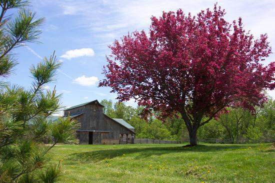 Kickapoo Valley Ranch Guest Cabins