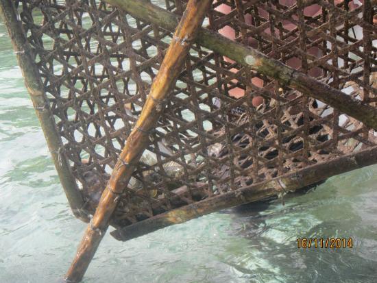 Constance Ephelia: встретил рыбаков, таков улов