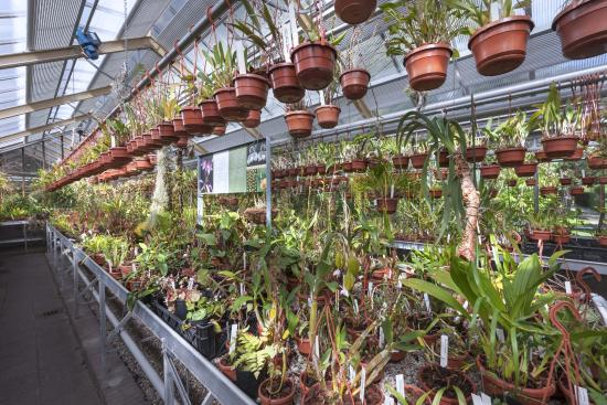 Botanische Tuin Leiden : Orchidcollection in tropical glass house hortus botanicus leiden