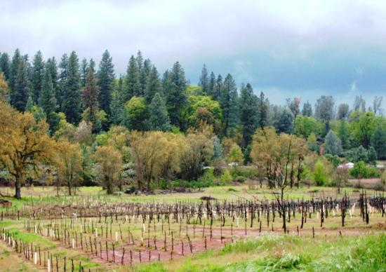 Grass Valley, CA: Nevada County Wineries