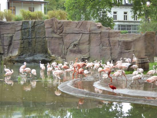 Flamingo Lagune Picture of Leipzig Zoo Zoologischer Garten