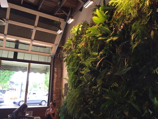 Singer Hill Cafe: Plant wall and open air walls.