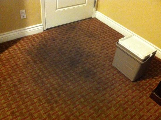 Rodeway Inn Near LA Live: carpet