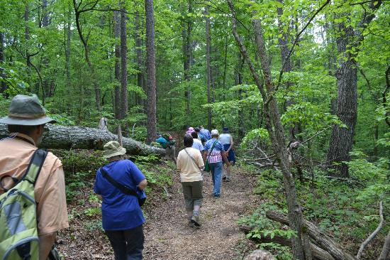 Potosi, MO: Enjoying nature's beauty on a hike through the woods
