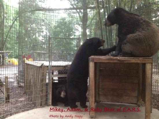 THE BEARS OF EARS - Picture of Endangered Animal Rescue