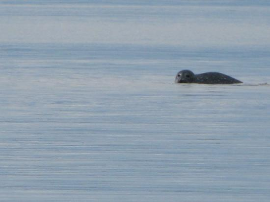 Windward Cottages: Seals sometimes come right into our cove!