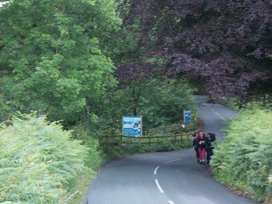 Esthwaite water trout fishery: the adjoining road