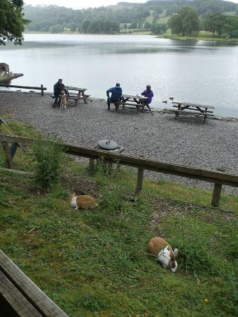 Esthwaite water trout fishery: picnic benches by the cafe