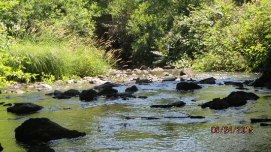 Angels Camp, CA: Angels Creek