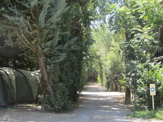 Camping La Capea: Parcelas muy arboladas, con mucha sombra