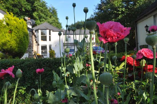 Ferndale House : Lovely ....