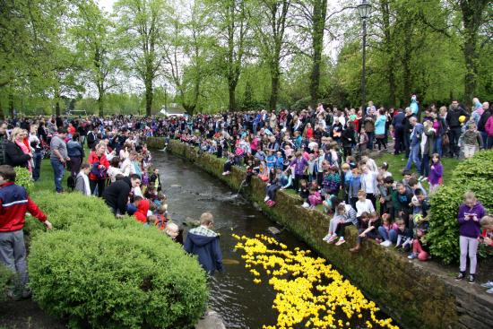 Strathaven, UK: The annual duck race in the burn that runs through the park.