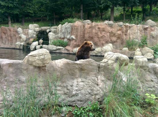 Zoo Brno: Камчатский медведь