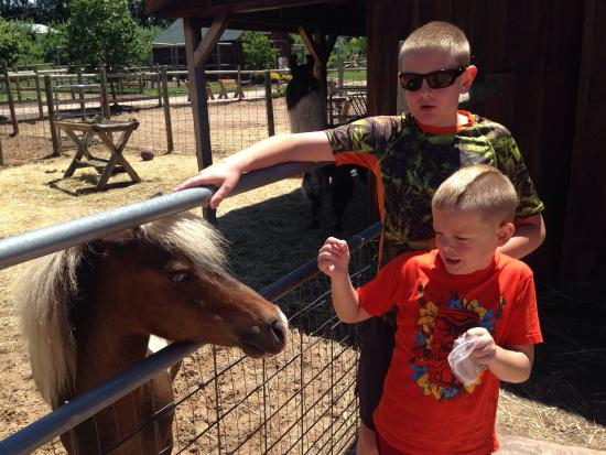 Lewis Farm Market & Petting Farm: photo1.jpg