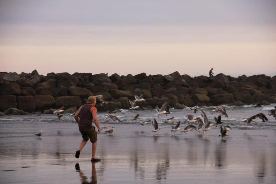 Ocean Shores, WA: Seagulls