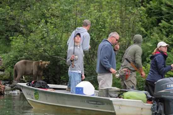 Nikiski, AK: Bears and fisherman ignoring each other
