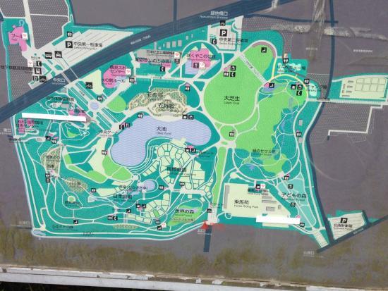 Tulips dan kincir angin picture of flower expo memorial park tsurumi ryokuchi osaka tripadvisor for Tsurumi ryokuchi swimming pool
