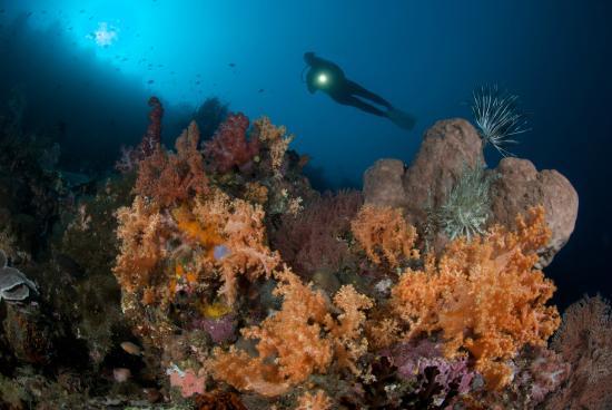 Murex Dive Resort: Amazing soft corals at Manado shore