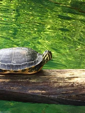 Tartarughe d 39 acqua foto di lago d 39 orta orta san giulio for Lago per tartarughe