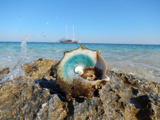 На диком пляже фото фото 697-396