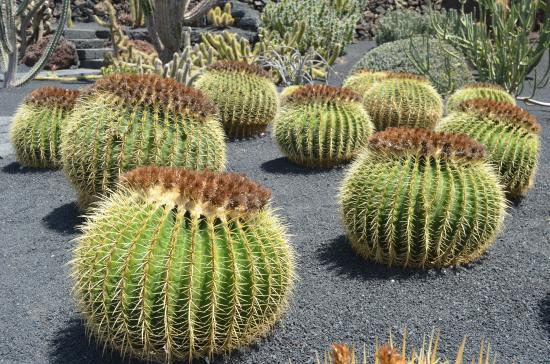 cactus picture of jardin de cactus guatiza tripadvisor. Black Bedroom Furniture Sets. Home Design Ideas