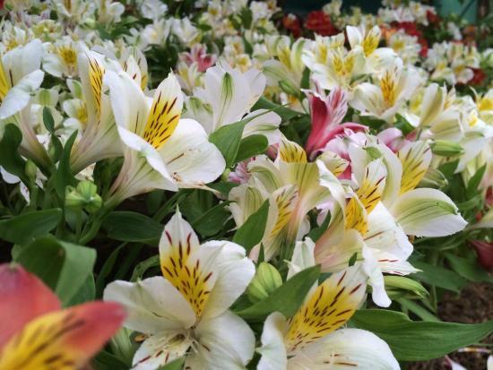 Deorali Orchid Sanctuary