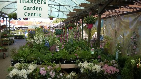 thaxters garden centre coffee shop create your own chelsea - Chelsea Garden Center