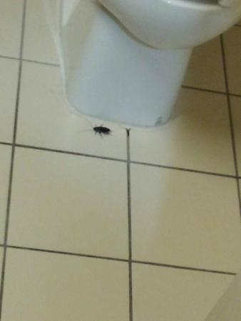 Cockroach In Hotel Bathroom Picture Of Crowne Plaza Dallas Market - Cockroach in bathroom