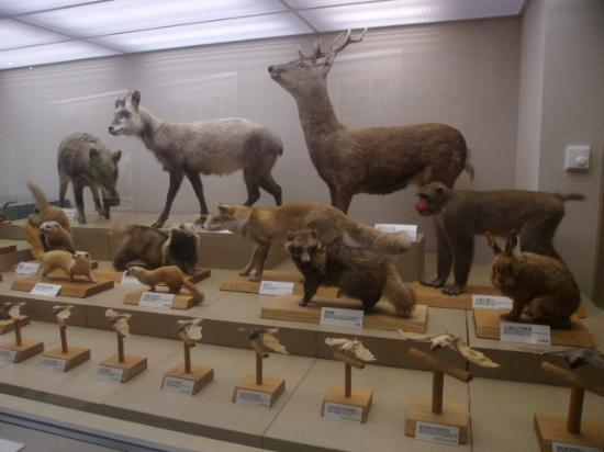 Miyazaki Prefectural Museum of Nature and History: 自然に関する展示コーナーの一例