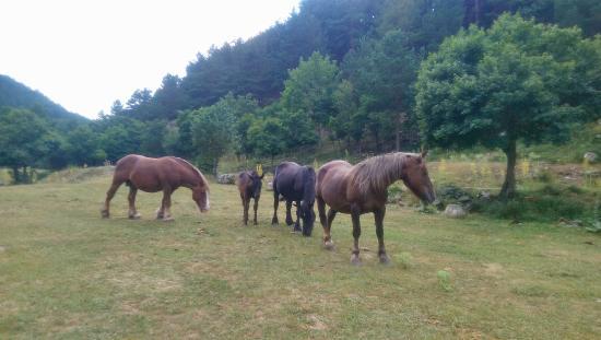 Villoslada de Cameros, สเปน: caballos