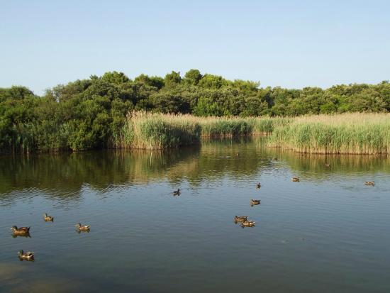 Leggende d 39 ancona il laghetto di portonovo for Laghetto per tartarughe usato