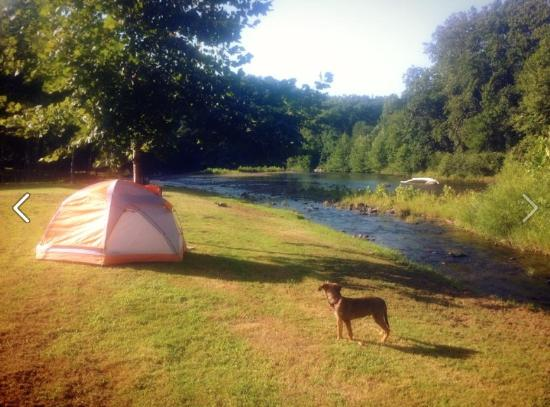 Parsons, Virginia Occidental: Our boy Murphy loved Five River Campground.