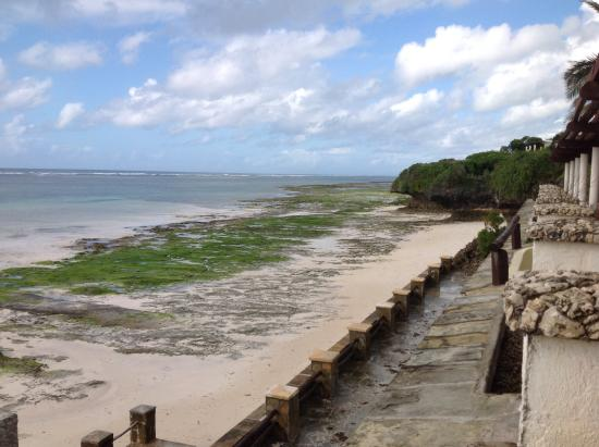 Diani Beach, Kenia: Sea bed at low tide
