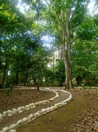 Casa Galeano: garden