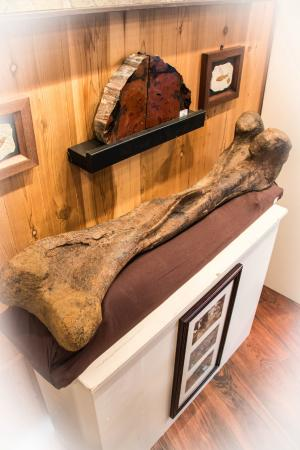 Lincoln City, Oregón: Edmontosaurus Bone