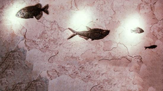 Lincoln City, Oregón: Fossil Fish Eocene Age