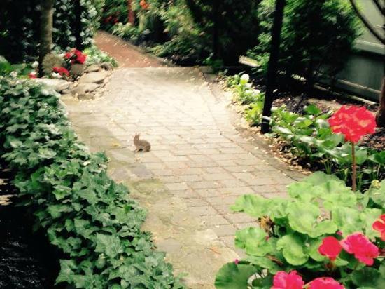 Victorian Ladies Inn : A bunny in the garden