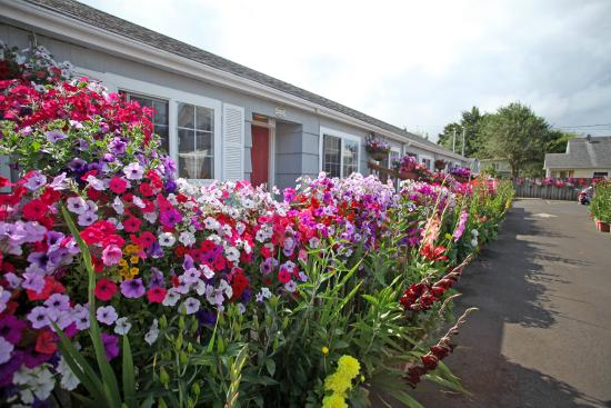 Paradise Suites & Rentals: Flowers Everywhere!