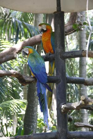 Alajuela, Costa Rica: Blue and yellow Macaw