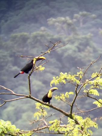 Children's Eternal Rain Forest: Toucans