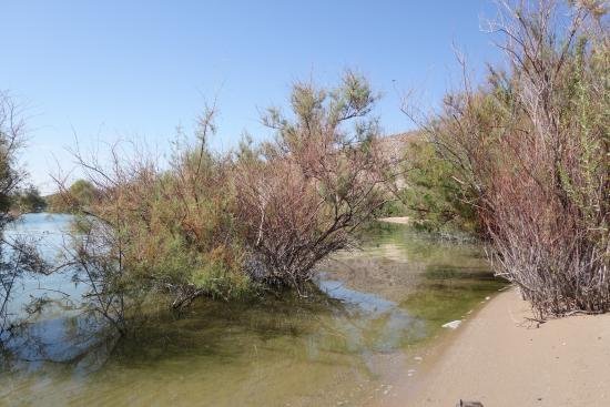Cottonwood Cove, NV: clean beachfront